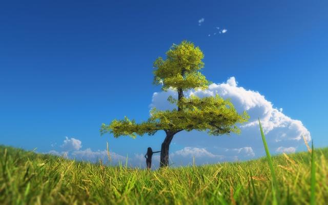 field, tree, the sky, landscape