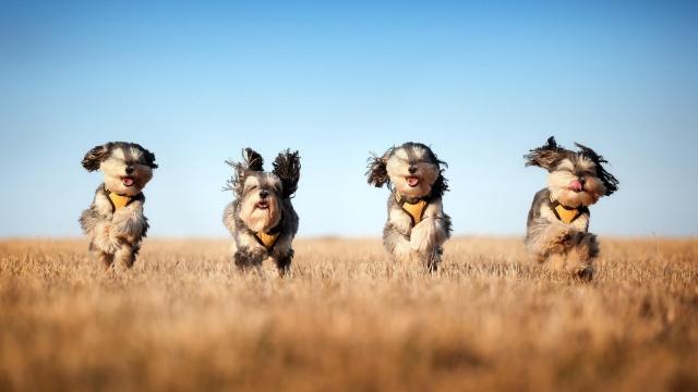 собаки, поле, небо, прикольно, весело, красиво