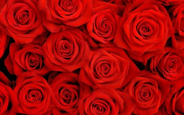 Текстури, троянди, червоний фон, квіти