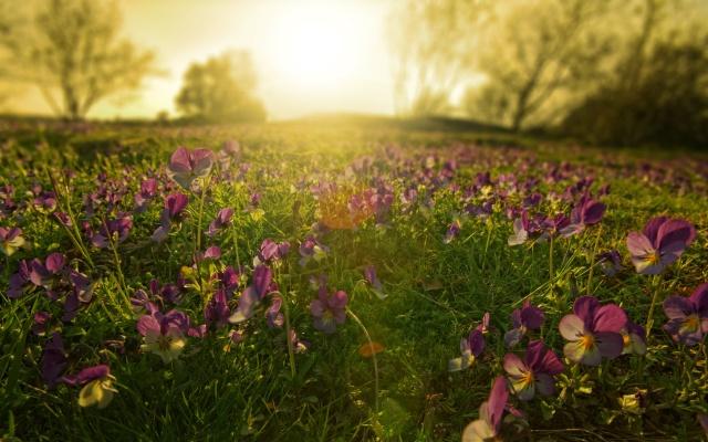 ковер, цветов, природа, закат, солнце, деревья