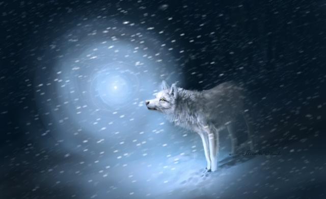 снег, метель, следы, волк, свет
