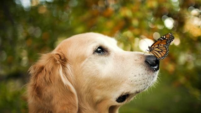 собака, бабочка