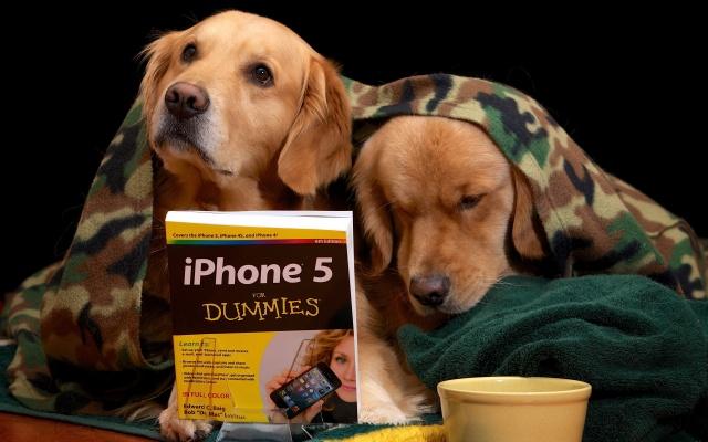 собаки, книга, урок