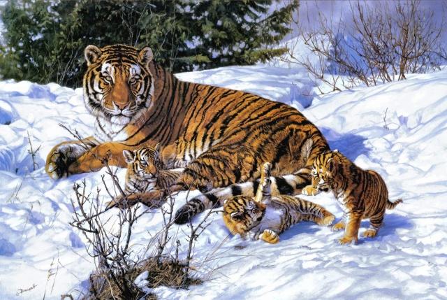 tygr, тигрята, zima, sníh, stíny .