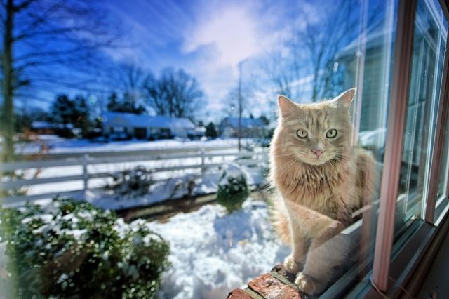 zima, okno, kočka, gregory j scott fotografie, světlo