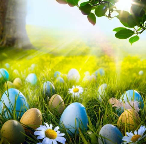 Easter, holiday, EGGS, nature, photoshop, meadow, tree, branch, leaves