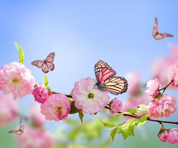 spring, photoshop, branch, Sakura, flowers, background, the sky, butterfly
