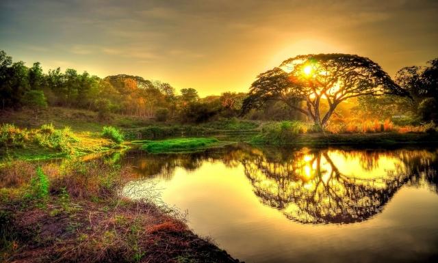 příroda, strom, slunce, nebe, západ slunce, rybník, odraz