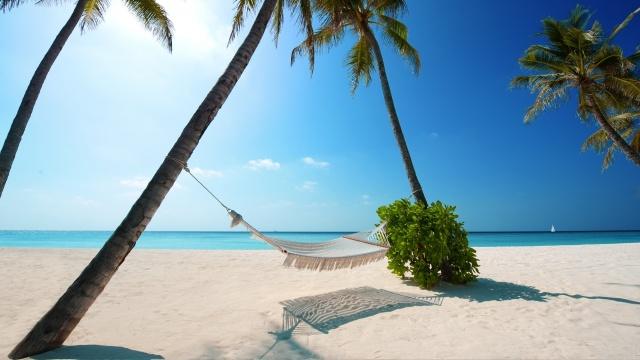 palm trees, sea, island, sand, water, the beach, summer