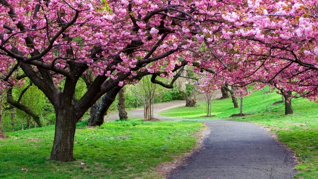 spring, flowers, pink, Park