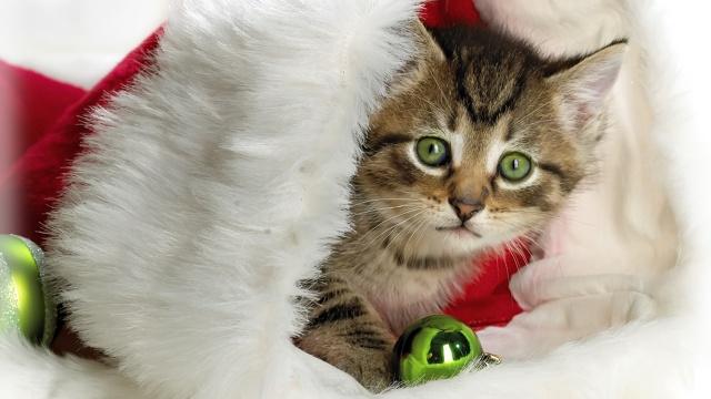 kotě, Nový rok