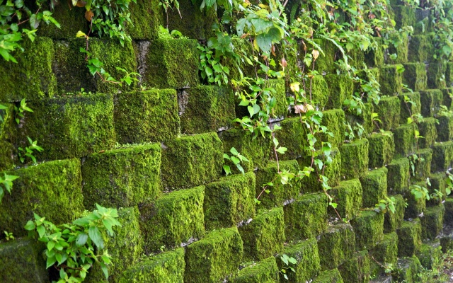 wall, stone, moss, green, leaves, vine, nature