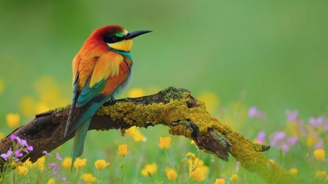 птица, филиал, цвета, деревья, дикий