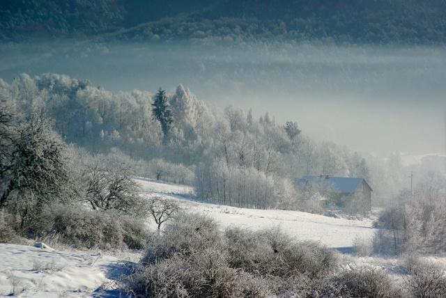 ліс, зима, сніг, краса