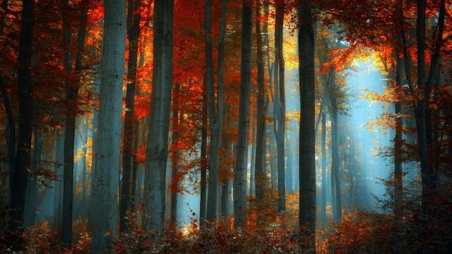 les, mlha, příroda