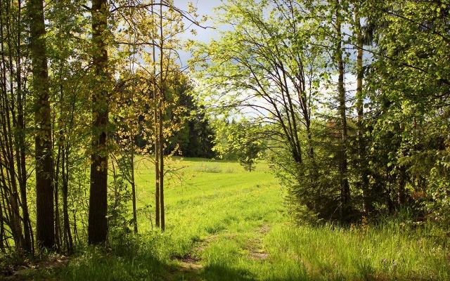 природа, тропинка, лето, лес, зелень, солнечно, деревья