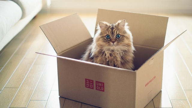 тород, коробка, кошка
