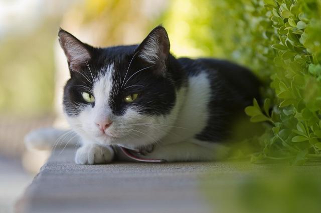 кошка, фон, взгляд
