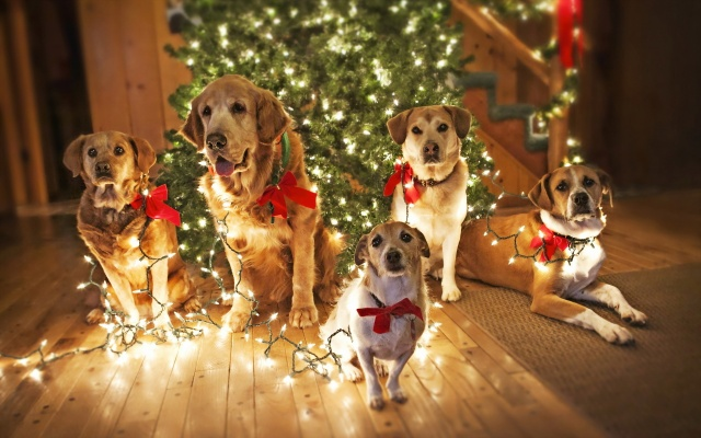 dogs, holiday, tree