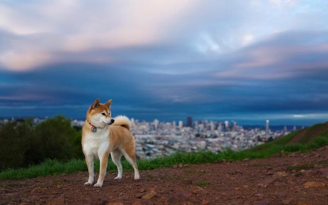 собака, фон, один