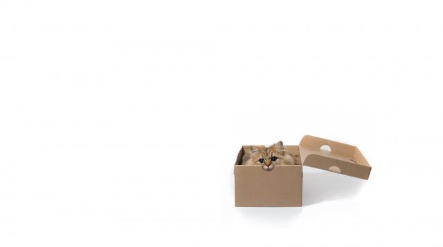 Daisy, minimalism, cat, c benjamin torode, white background, box