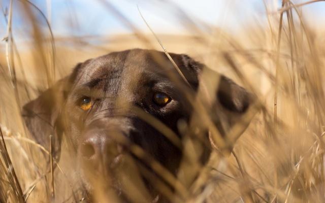 фон, взгляд, собака