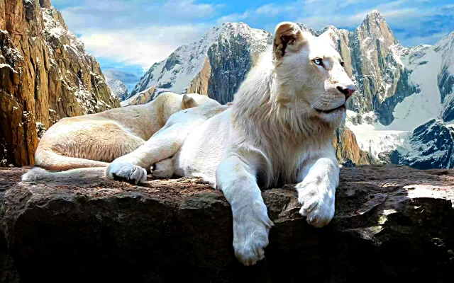 lion, white, mountains