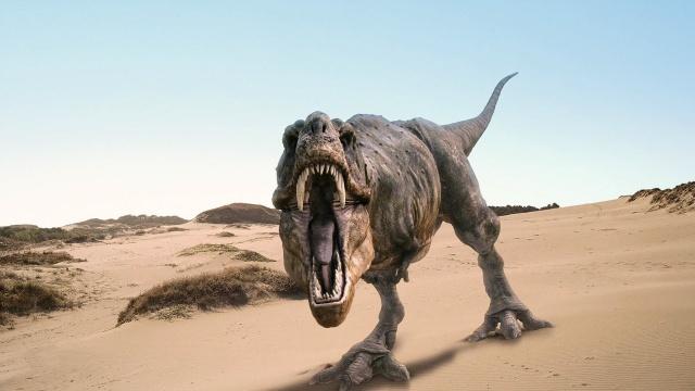 padnu, rex, písek, Dinosaurus, za řev