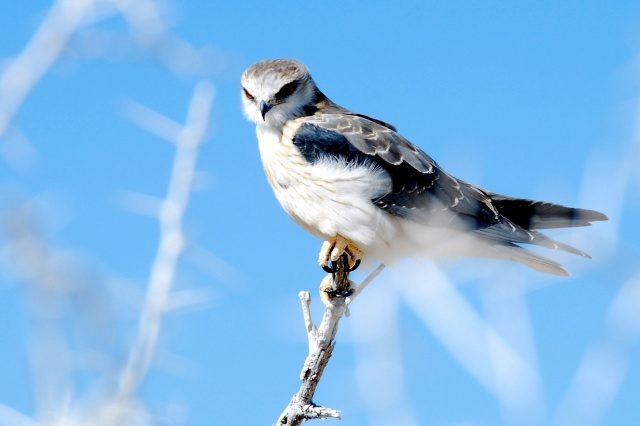 bird, Falcon, nature