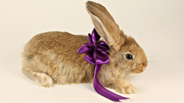 bow, ears, Purple, bow, paws, rabbit, gift