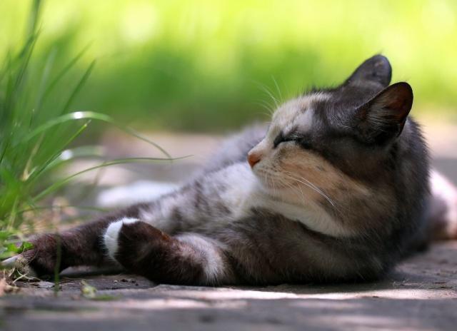 cat, the rest, grass