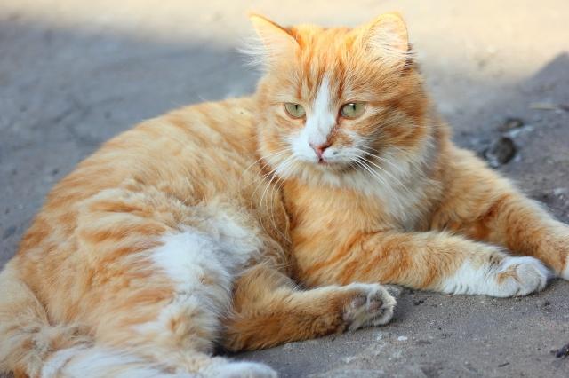 cat, red