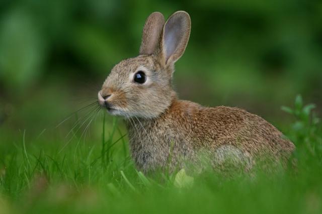 размытость, кролик, трава, заяц, зелень