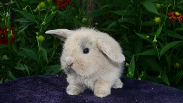 кролик, пухнастик, малюк
