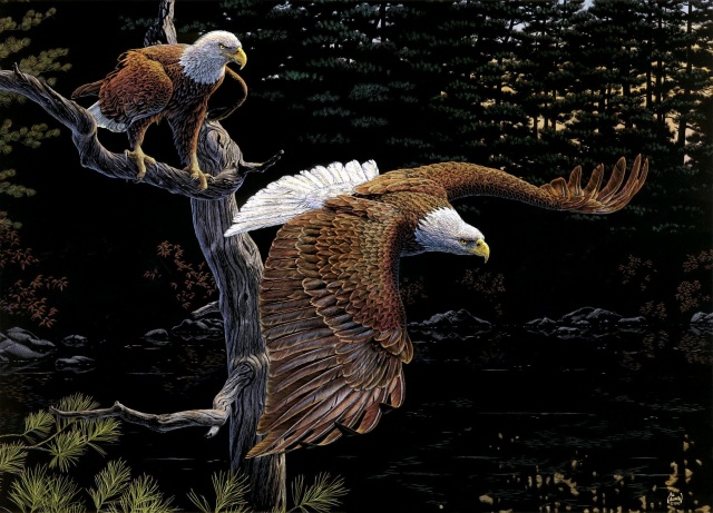 tree, art, the eagles, forest, Al agnew, birds