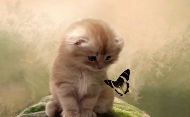 cat, kitten, butterfly, attention, background