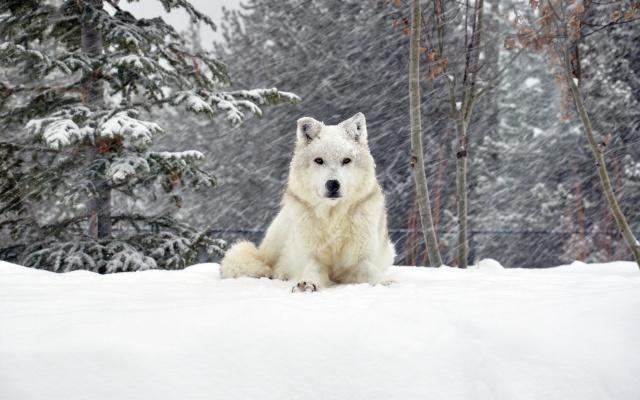 зима, собака, снег