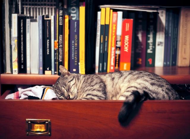 сон, кішка, полиця, книги, одяг, шафа