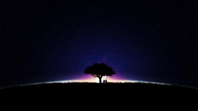 зірки, ніч, небо, дерево