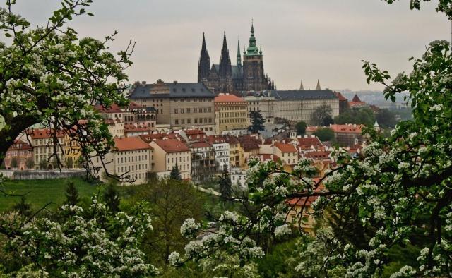 Чехия готова платить украинским мигрантам за возвращение на родину