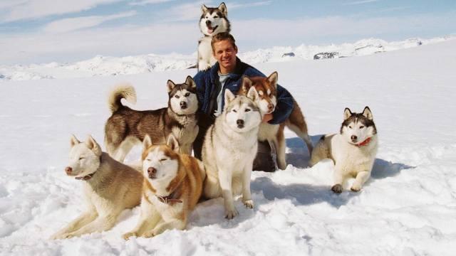Пол Уокер, Пол Уокер, актер, зима, собаки, хаски