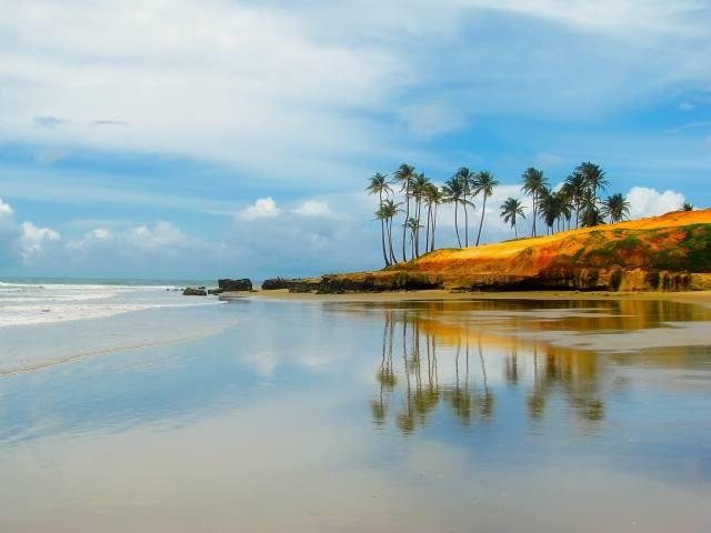 небо, океан, отражение, берег, пальмы, Бразилия