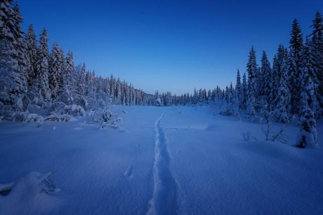 zima, sníh, les, paseka, stezka