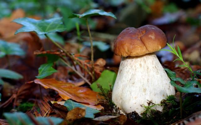 white, mushroom, macro