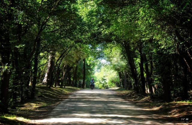 Uruguay, деревья, дорога, мотоцикл, мужчины