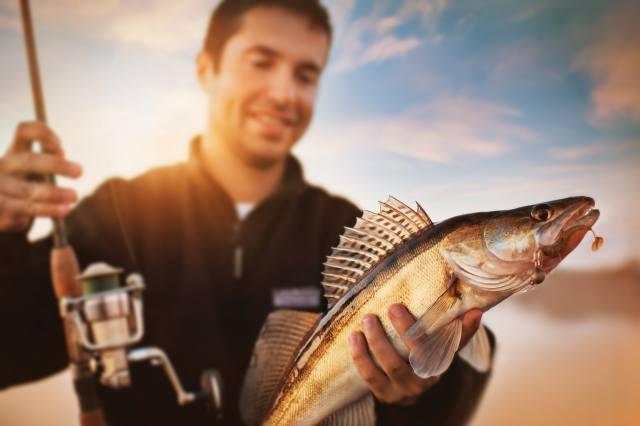 рыбалка, рыба, судак, хищник
