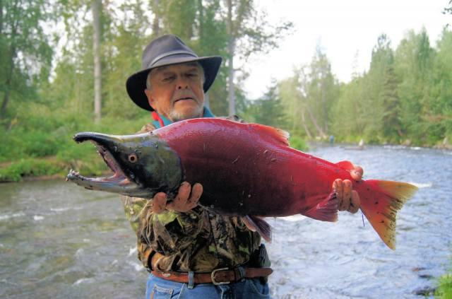 река, рыбалка, лосось, трофей