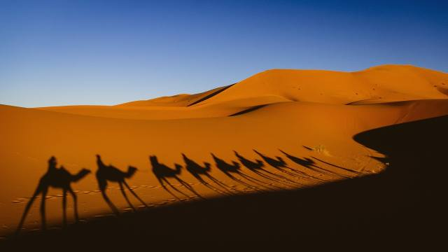 desert, Sugar, caravan, shadow