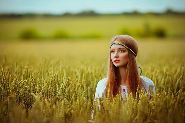 девушка, поле, пшеница, українка, вишиванка, довге волосся, красуня, погляд
