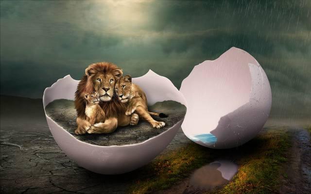 львы, семья, яйцо, скорлупа